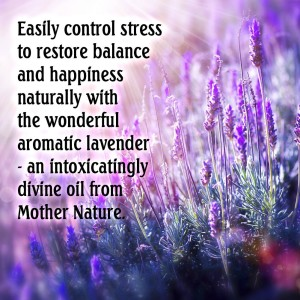 lavender essential oil3